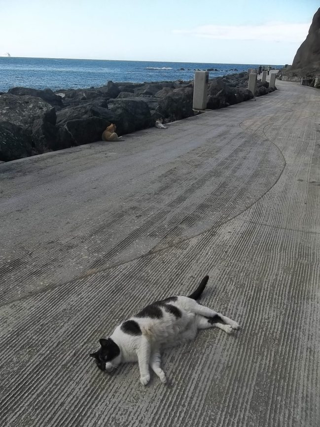 Cat on a hot day in Old San Juan.