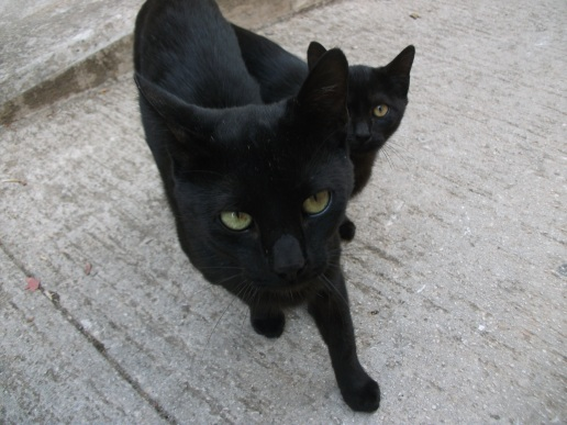 Black cats on the Camino.