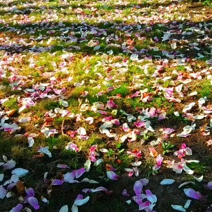 Magnolia graveyard